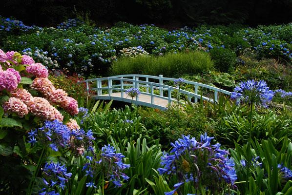 Trebah Garden copyright Alexander Jung