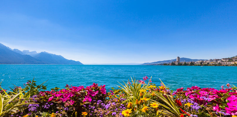 Panorama view of the Alps, Geneva lake and Montreux cityscape with colorful flowers in foreground on a sunny summer day, Canton of Vaud, Switzerland Copyright Peter Stein