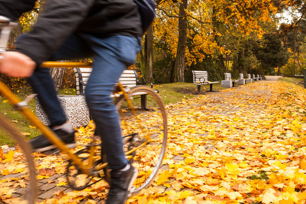 Man riding bicycle on path covered with golden leaves in city park in autumn Copyright Konstantin Romanov