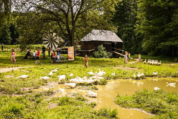 Sibiu European Best Destinations - ASTRA museum