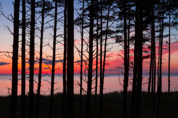 View on Baltic sea through tree trunks in pine forest after sunset - Copyright Konstantin Romanov