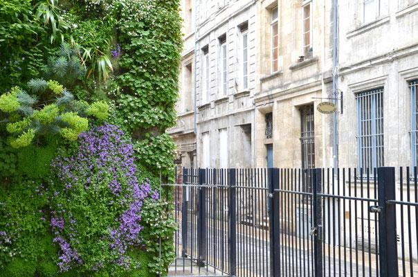 Mur-végétal-square-Vinet-Bordeaux
