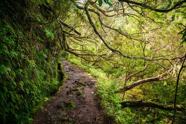Levada Caldeirao Verde, Madeira, Portugal - Copyright Anna Lurye