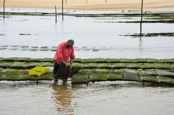 Oyster-farmer-Arcachon