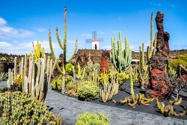 Guatiza village in Lanzarote copyright Olena Tur