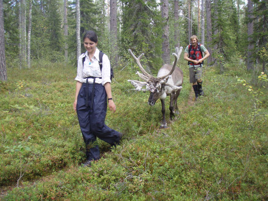 Wild Taiga - European Destinations of Excellence - European Best Destinations