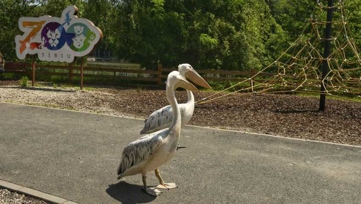 Sibiu - European Best Destinations - zoo-sibiu-dragos-dumitru
