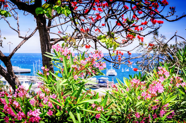 Funchal, Madeira island - Copyright symbiot