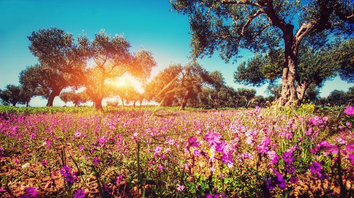 Sicily - European Best Destinations - Field of flower in Sicily Copyright  Standret