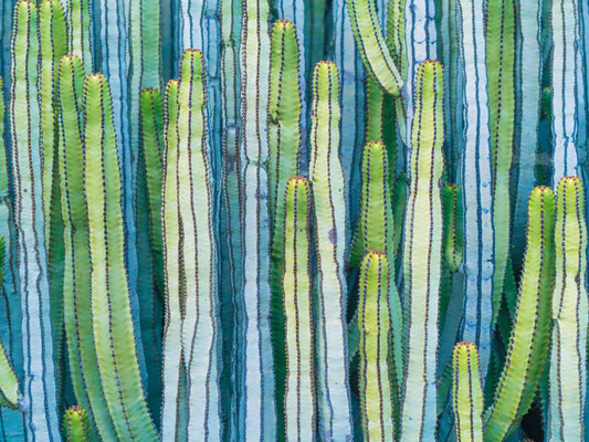 Tenerife - European Best Destinations - Cactus in Tenerife - Copyright  ED Reardon