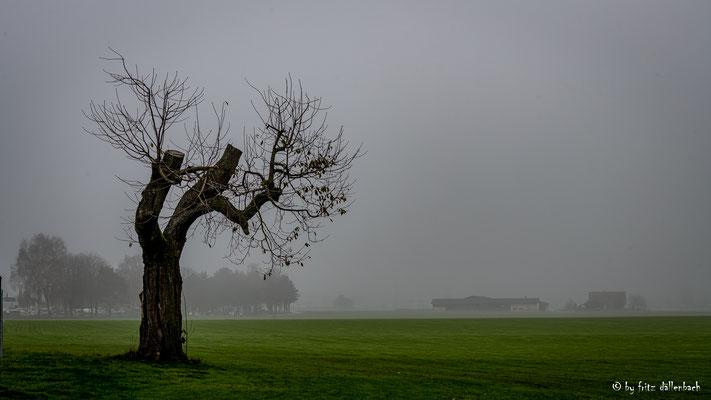 Nebel am Morgen, Aargau