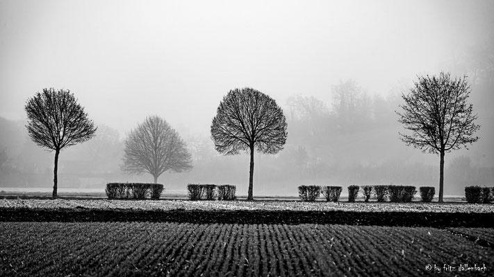 Baumreihe, Aargau