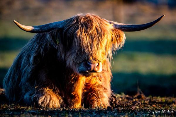 Highlander, Neeracherried