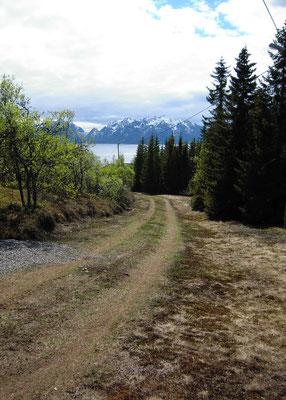 diesen Weg entlang gejogt