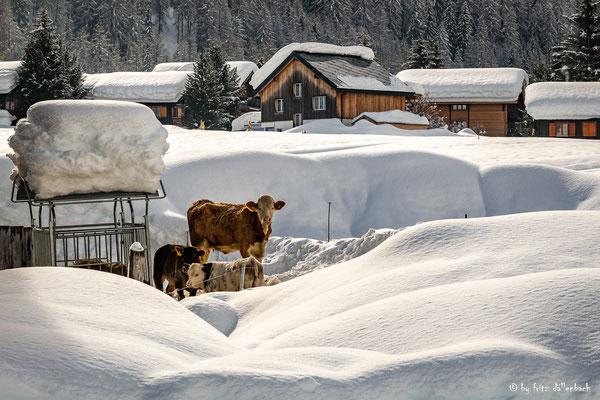 Schnee, Goms