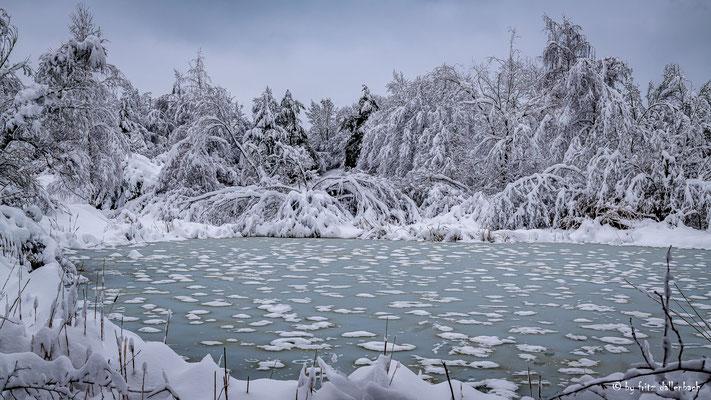 Teich, Irchelpark