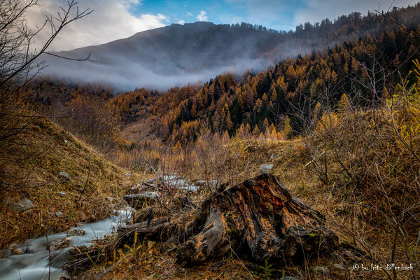 Wurzelstock, Oberwald