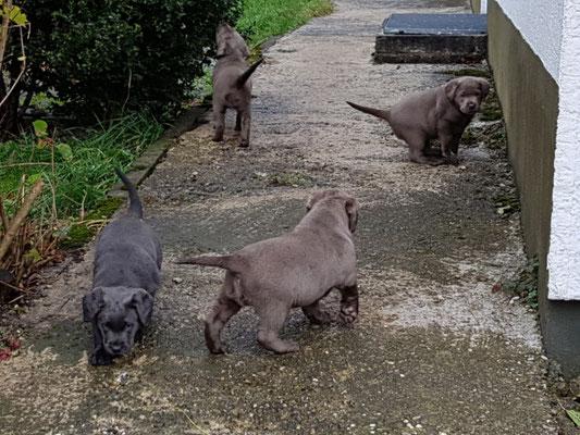 Faye, Fenja, Funny-Fee, Fritz