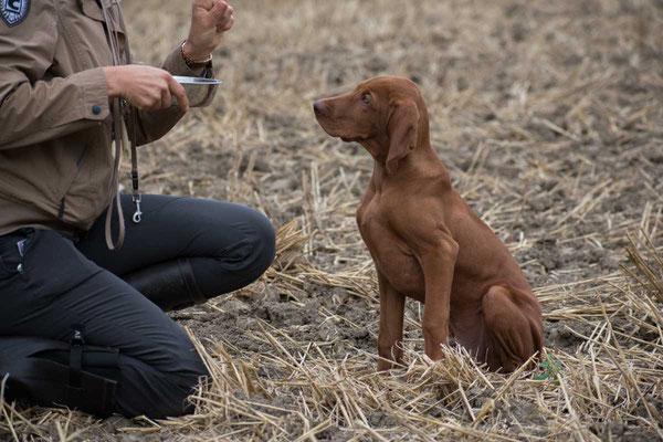 Hund sitzen lassen