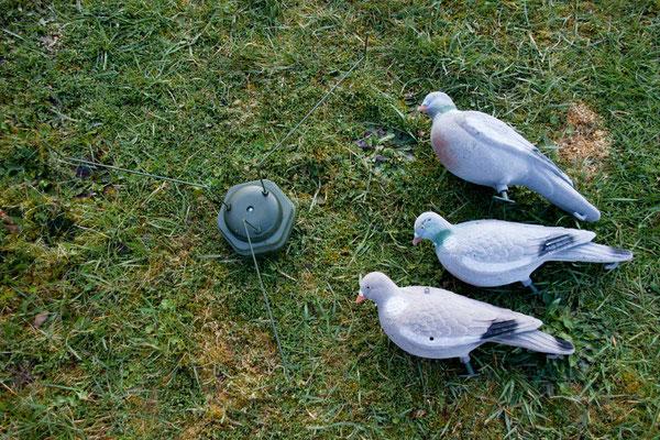 Taubenmagnet selber bauen für die Taubenjagd