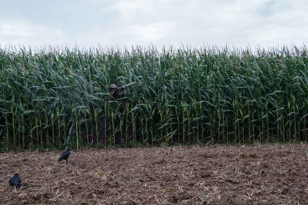 Tarnschirm im Mais bei der Krähenjagd