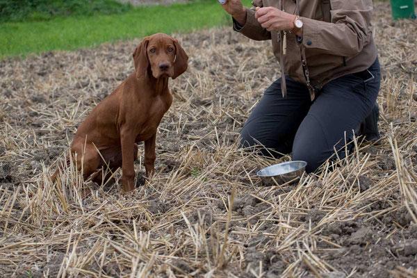 """Der Hund soll sich eigenständig ohne Kommando hinsetzen. Das wird wieder mit einem """"klick"""" und Futter belohnt."""