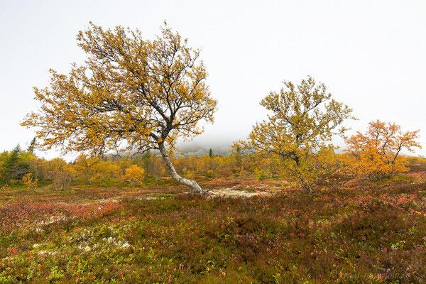 Herbst am Idre Fjell