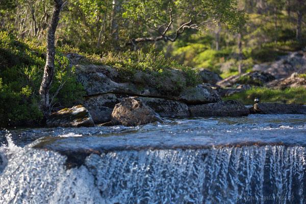 Wasseramsel Revier, Gaulafjell