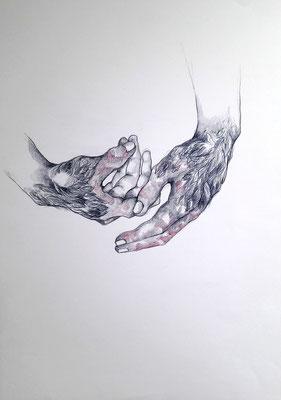 Les mains qui plument, l'oie blanche