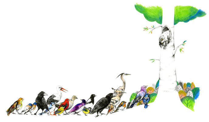 File d'oiseaux