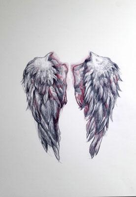 Ses ailes, l'oie blanche