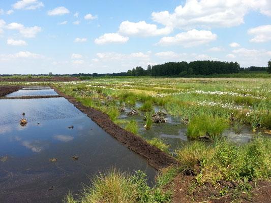 links unbearbeitet, rechts bereits bepflanzte Flächen