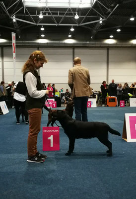 Gilbron Pride Zoom In Maigret - best male puppy, German Winner 2017