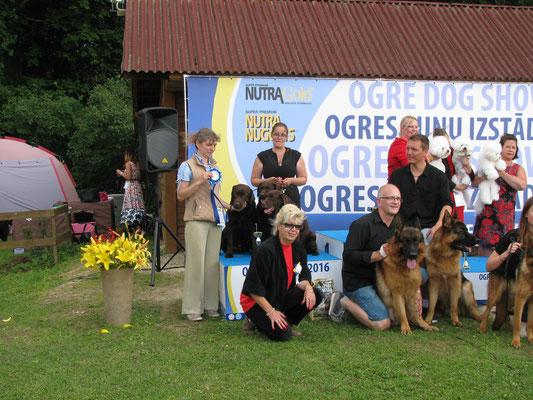 BIS-II breeder at Ogre Winner 2016!