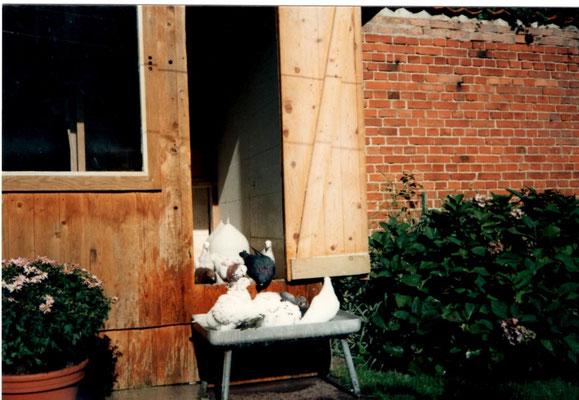 Die Tauben Badewanne