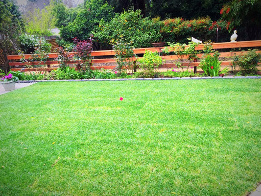 Machado Landscaping Woodland Ca : Softscape ar landscaping