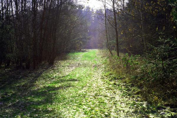 Spazierweg bei unserem Badestrand  am Brückelsee - 100m vom Haus - Ferienhaus am Brückelsee - Erika Wölfel