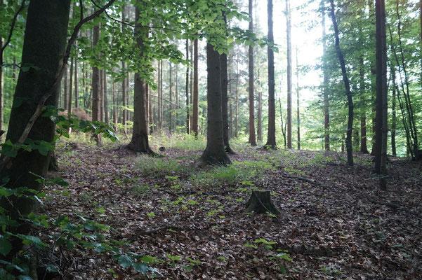 Der Elberadweg zwischen Geesthacht und Lauenburg führt durch den Wald.