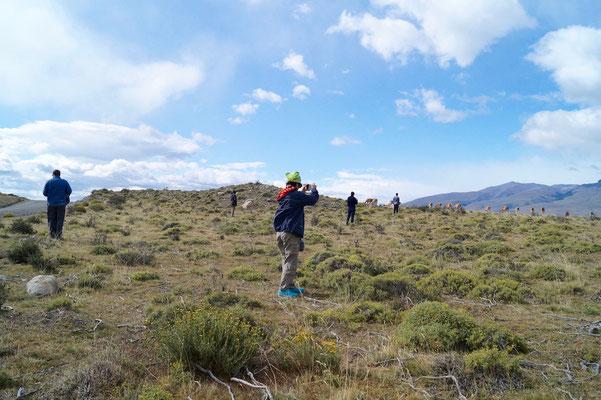Torres del Paine: Menschen wie ich schauen nach Guanacos