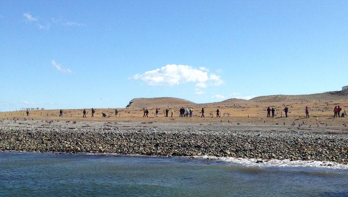 Isla Magdalena: Pinguin-Besucher
