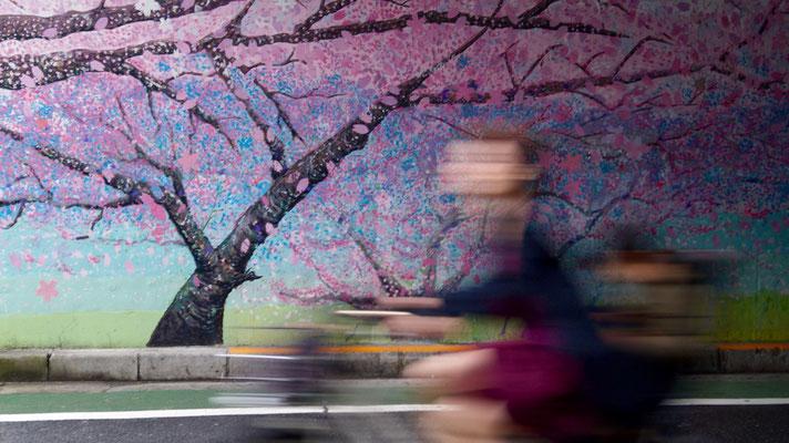 Sakura: Unecht (Meguro-gawa)