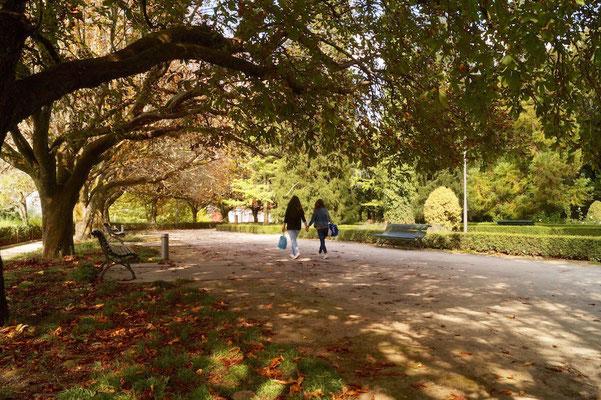 Ein lauer Herbsttag unter dem Blätterdach.