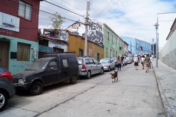 Valparaíso Street Art: Straßenhunde schließen sich uns an.
