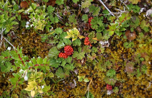 Beeren & Blüten: Das Klima um den Serrano-Gletscher ist mild.