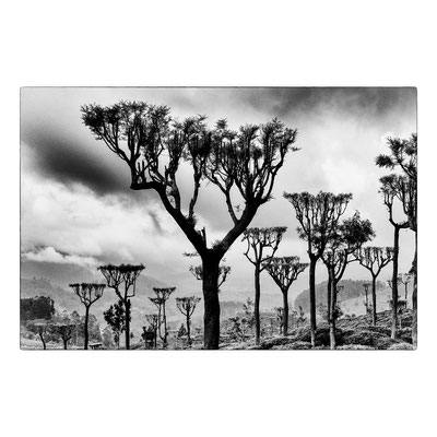 The Candelabra trees, Sri Lanka 2015 © OBS