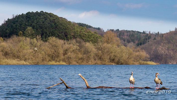 Am Rande des Vogelschutzgebietes