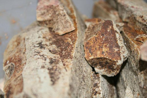 Cordaitenblätter-Fund beim Säubern des Blatthorizontes