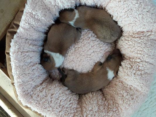 Die ersten Drei ganz kurz nach der Geburt