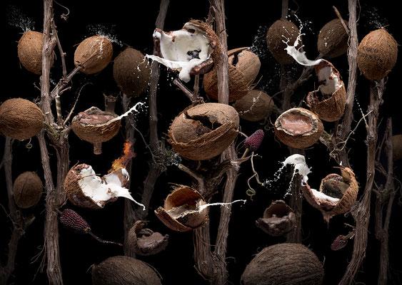 Coco nutellae © Olaf Bruhn 2018