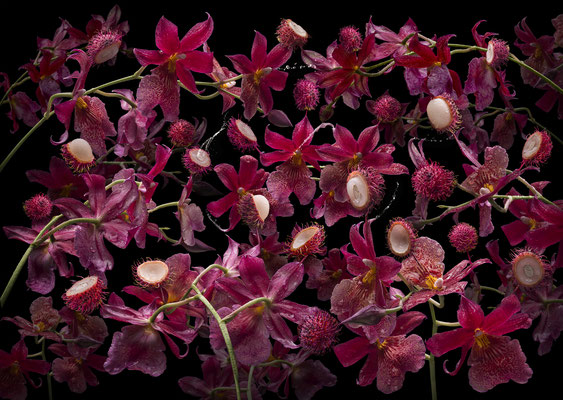 Orchidea rambutana · © Olaf Bruhn 2019